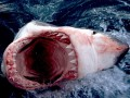 Акулы турбизнеса