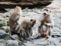 Маврикий: зоопарк Ля Ваниль