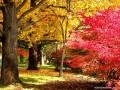 Осень: лучшие обои для рабочего стола