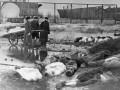Похороны умерших в дни блокады в Ленинграде. Волково кладбище. 1 октября 1942 года. Фото Бориса Кудоярова с сайта РИА Новости