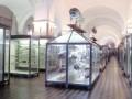 Готовность первых залов Зоологического музея