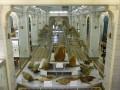 Один из залов Зоологического музея, современный снимок (автор фото неизвестен)