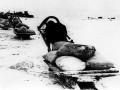 Доставка продовольствия гужевым транспортом по льду Ладожского озера. 1942 год