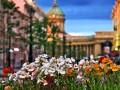 Цветы на Малой Конюшенной улице, фото 2009 года