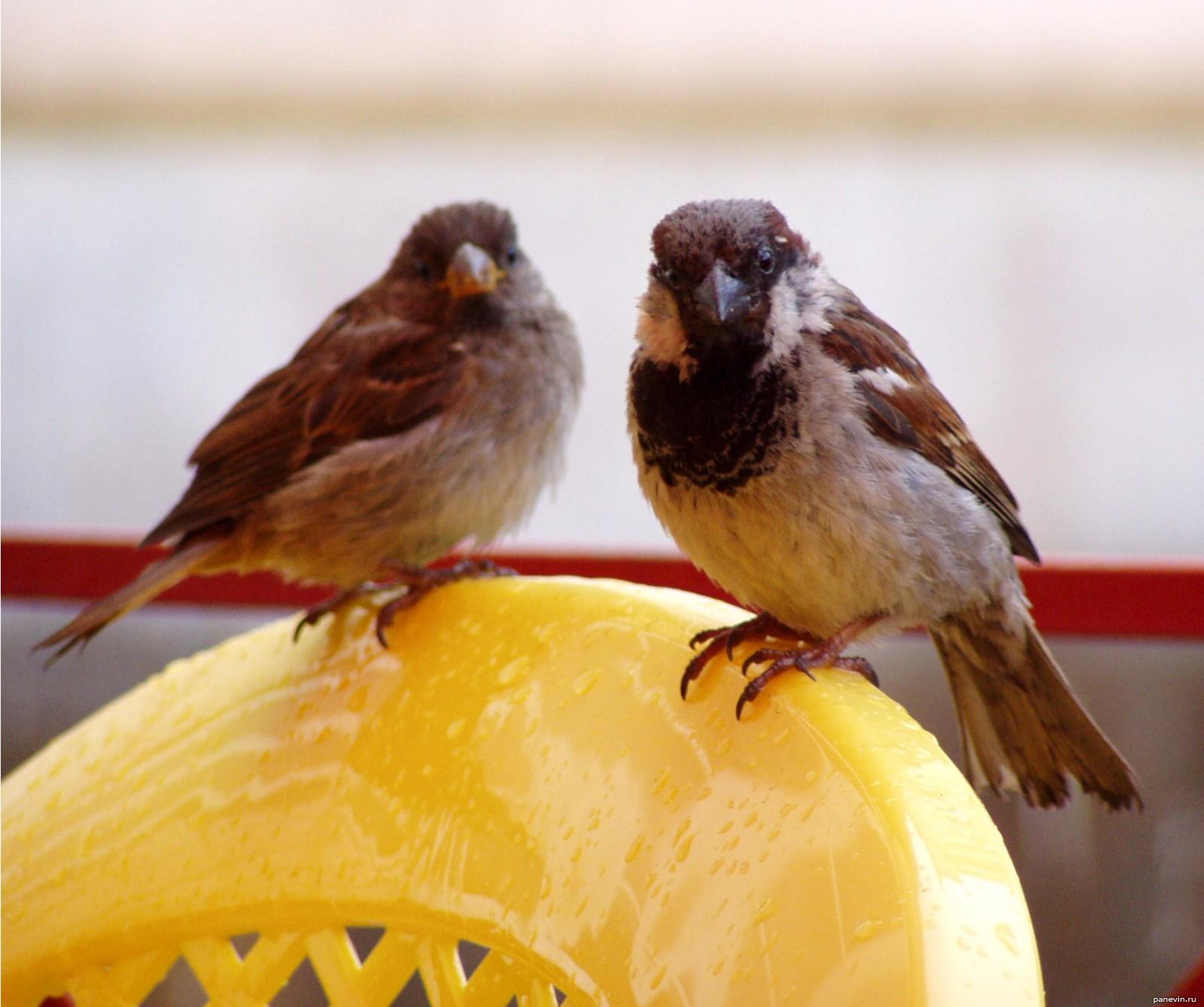 Птица умеющая шить 3 фотография